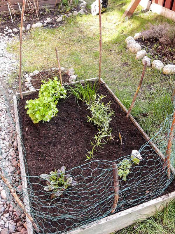 veggiebox, garden. greenery