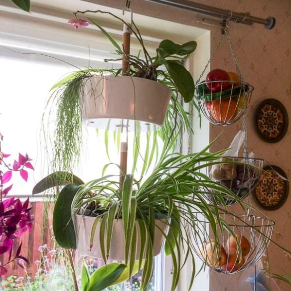 plants, orchids, kitchen