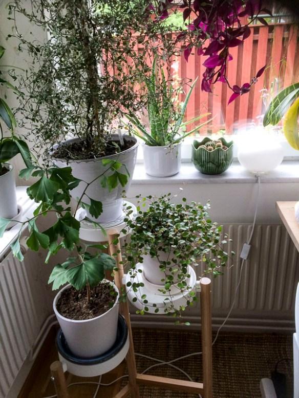 plantstand, kitchen