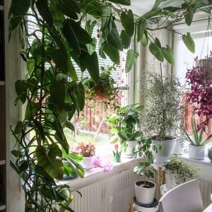 plants, houseplants, kitchenwindow