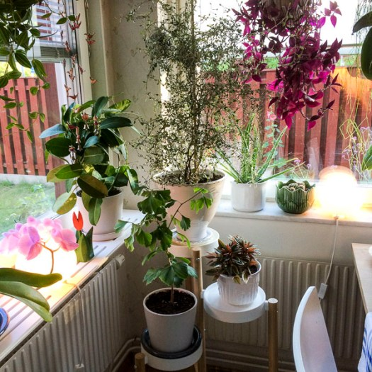 plants, houseplants, kitchen