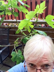 plantselfie, figtree, nini