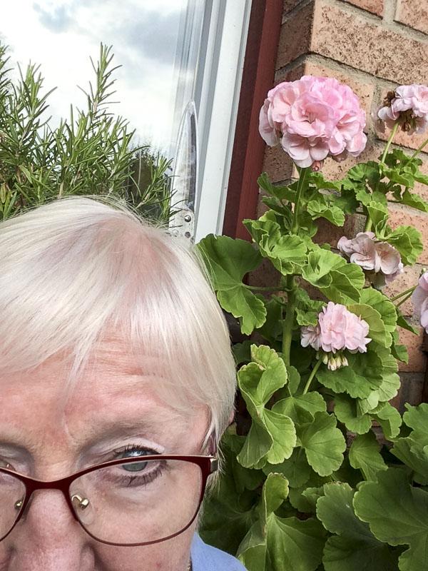 plantselfie, pelargonia, Mårbacka, nini