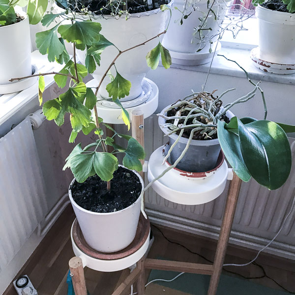kitchenplants