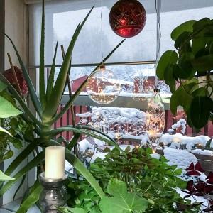 plantsandlight