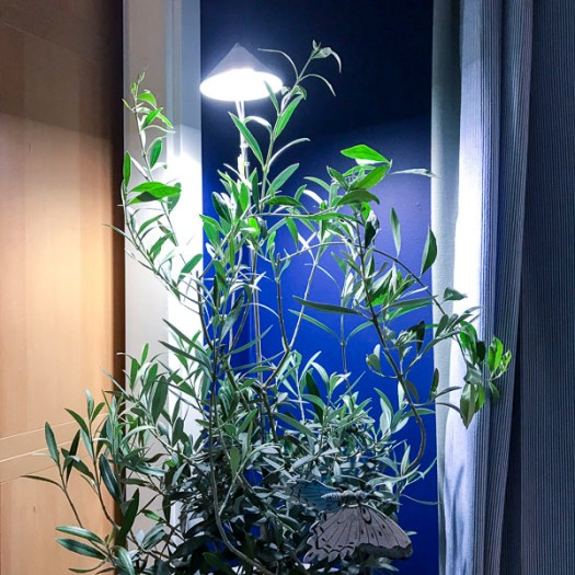 plantandlights