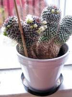 cactus2017-04-05_9