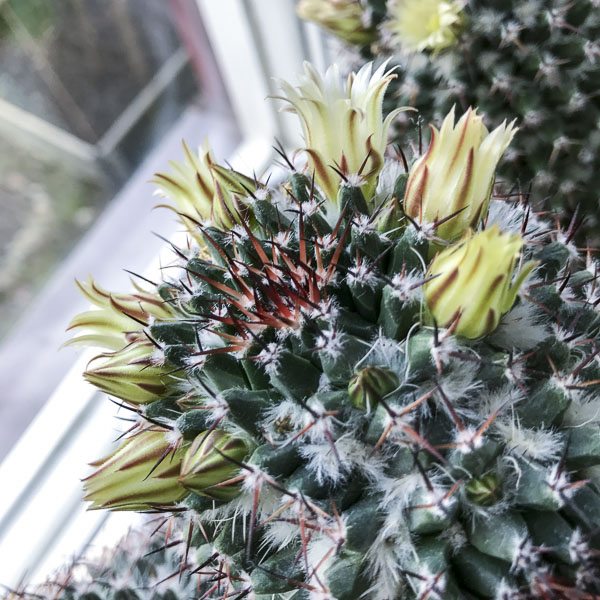 cactus2017-04-16