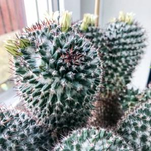 cactus2017-04-16_3