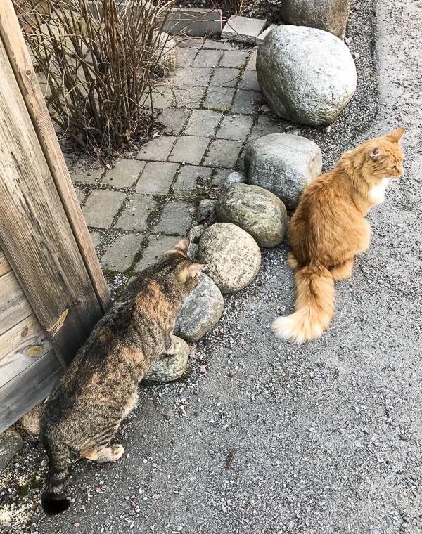 gustav, cats