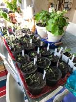 Plants and seedlings