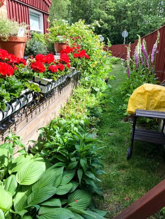 Flowerbed beside my patio