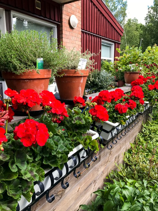Pelargonias and pots on the railing