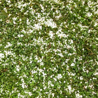 Hail on the grass.