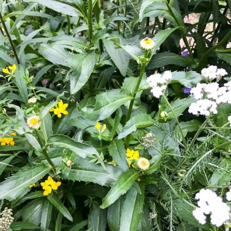 summerflowers20170701