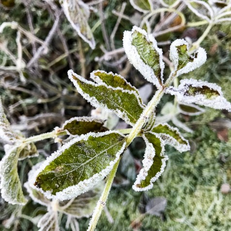 frost20171108_6