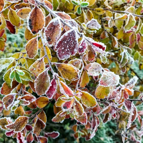 frost20171108_7