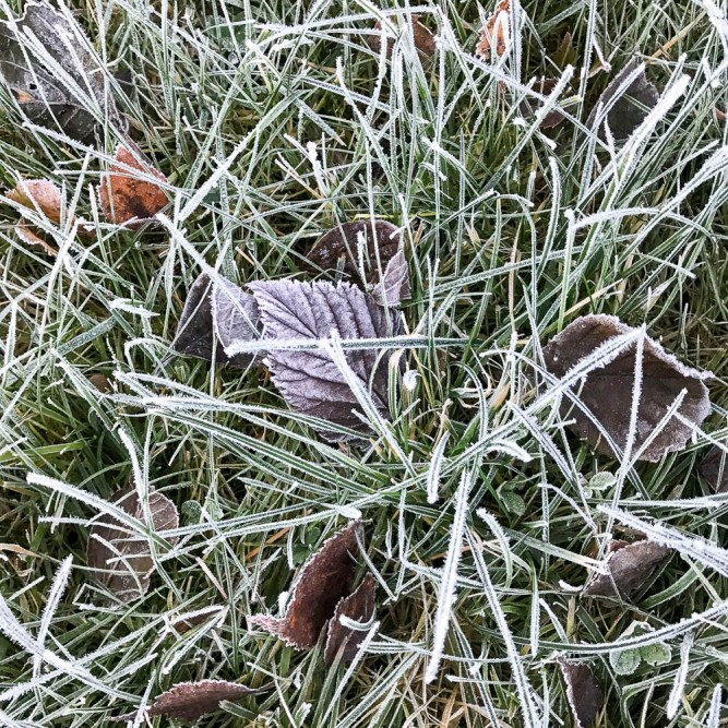 frost20171108_8