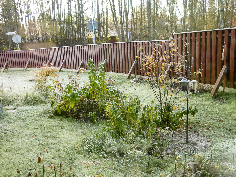 frosty, morning, garden