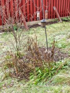 garden, winter