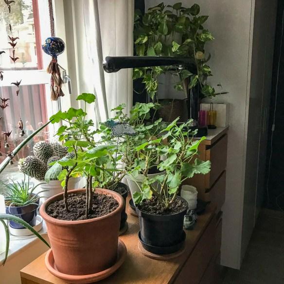indoorplants, bedroom