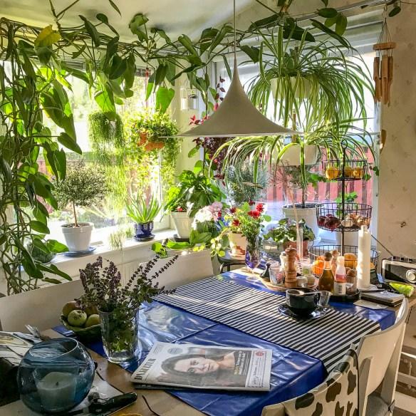 kitchenwindows, indoorgreenery