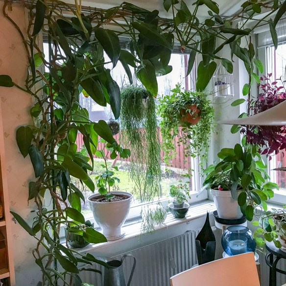 indoor plants, kitchenwindows