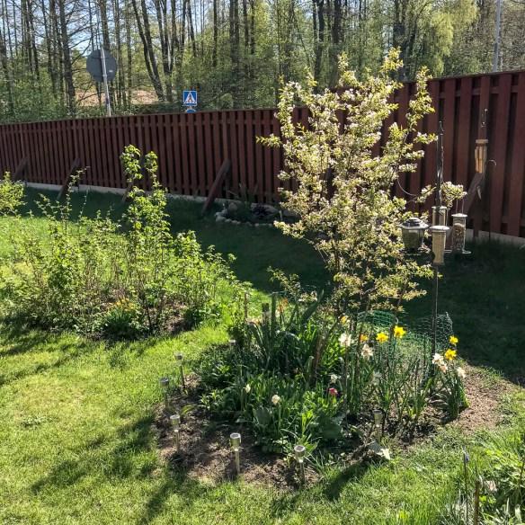 springtime, summer, garden