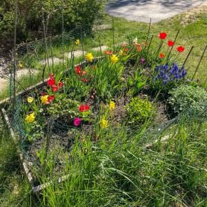 flowerbed, springtime