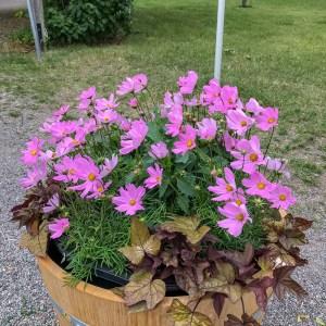 flowers, ulriksdalspalace