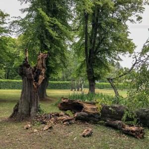 fallentree, ulriksdalpalacepark