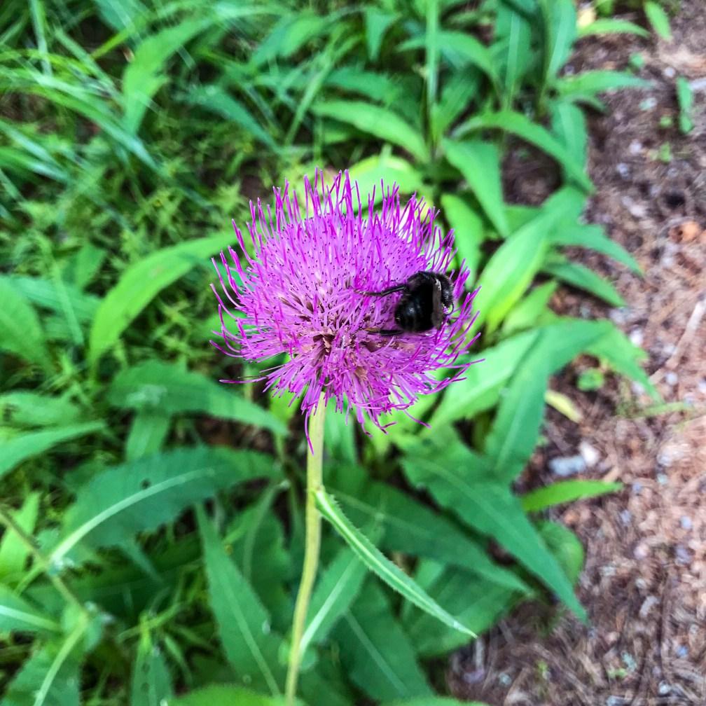 flower, bumblebee