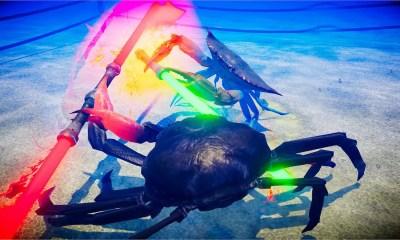 Fight Crab Screenshot