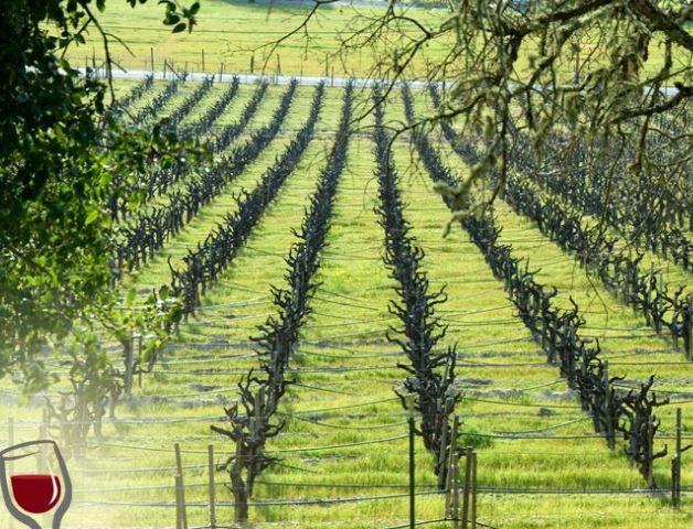 vineyard wine maps mobile application for travelers and wine enthusiasts
