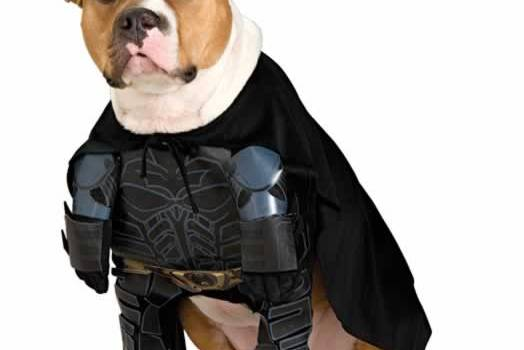 Dog Batman Halloween Costume