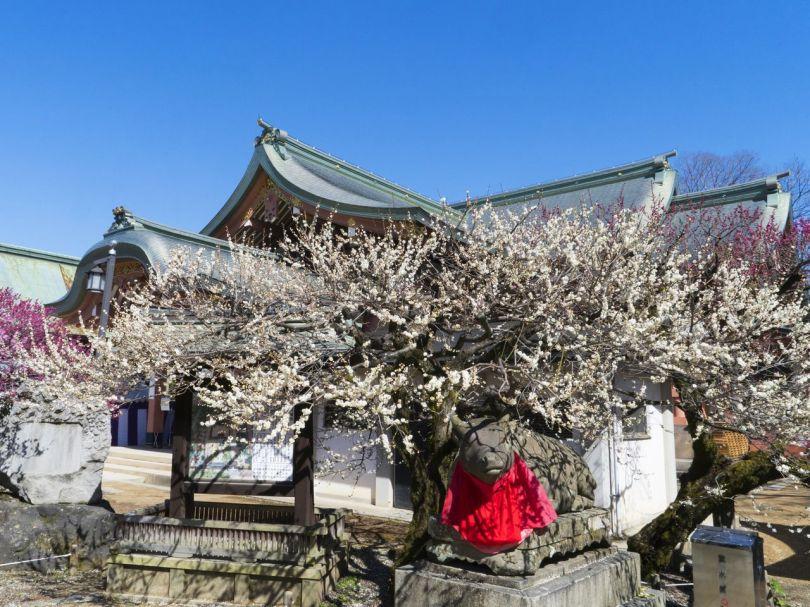 Une fleur s'épanouit au-dessus d'une statue en pierre d'un bœuf couché, près de la maison du trésor du sanctuaire.