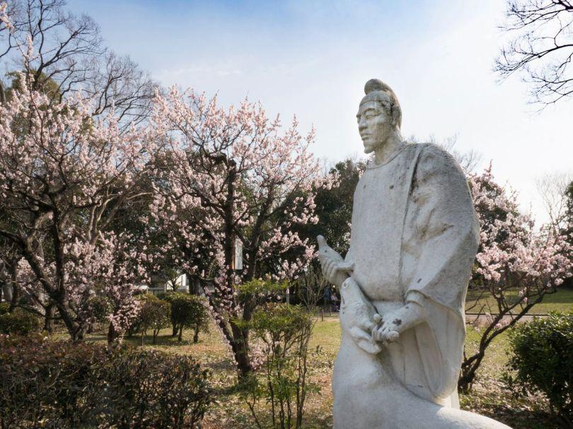 Abricotiers japonais en fleur au parc Daisen.