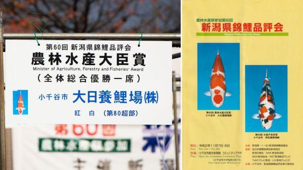 Tanto la tarjeta de presentación de la nishikigoi (izquierda), como el folleto informativo (derecha), utilizan fotografías de las carpas vistas desde arriba.