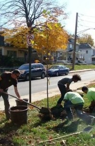 Four people planting a tree