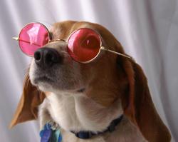 glasses2201