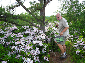 Toejam finds a Geocache amid blooming mountain laurel (prior visit).