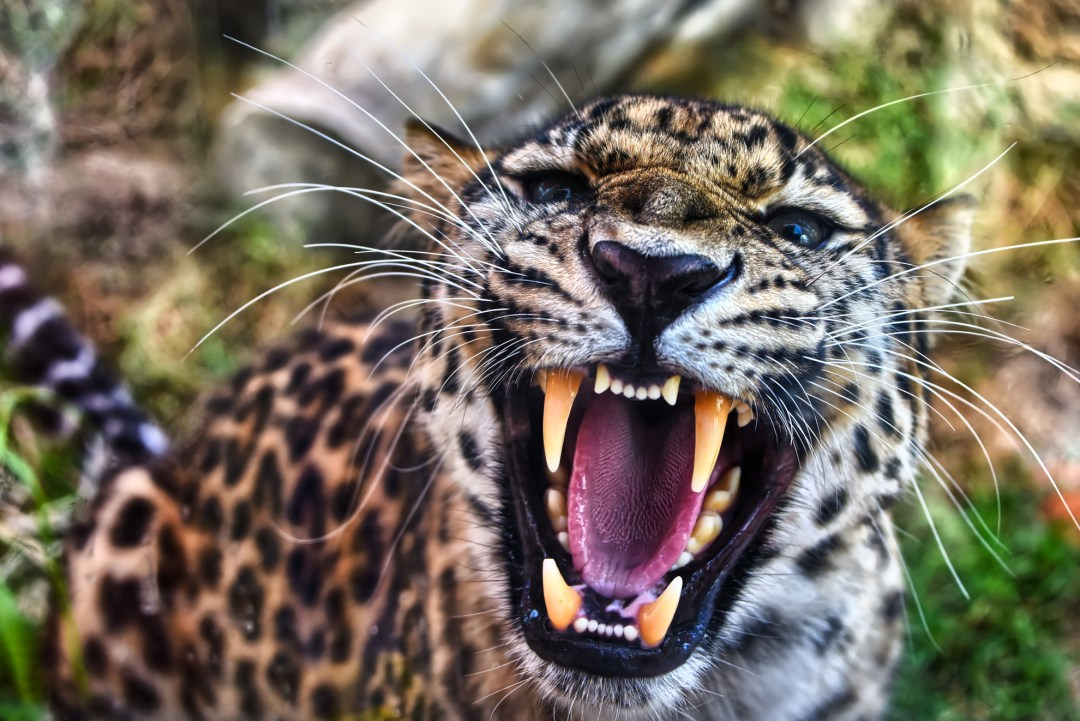 Travelogue: Kenya – The Safari Experience!