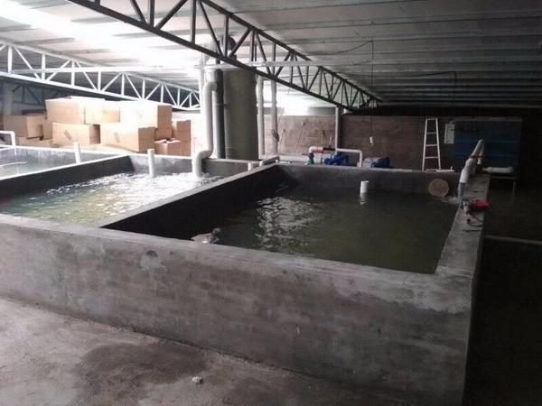 福建鰻魚工廠化標粗水處理係統