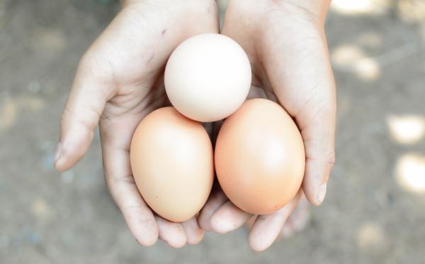 Organic Eggs In Hand