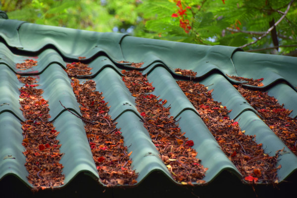 Fall Leaves on Roof
