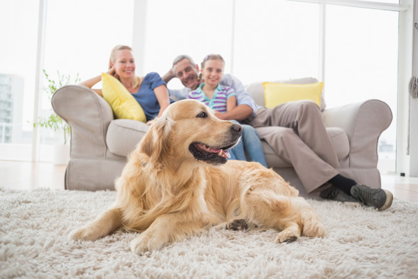 Family Golden Retriever