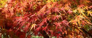 Journées des plantes 2016 au Lac d'Aiguebelette : Naturellement potager
