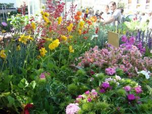 25ème foire aux plants de Saint-Michel de Maurienne samedi 13 et dimanche 14 mai 2017
