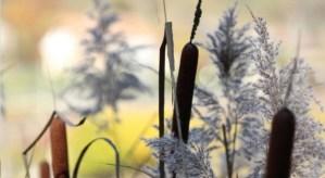 Journées des Plantes au Lac d' Aiguebelette le 12 et 13 octobre 2019