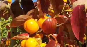 Journée des plantes au lac d'Aiguebelette samedi 9 et dimanche 10 octobre 2021